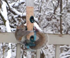 squirrel3 (2)